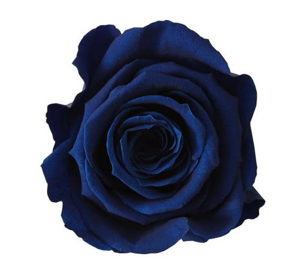 Blue Roses Meaning Single Blue Rose