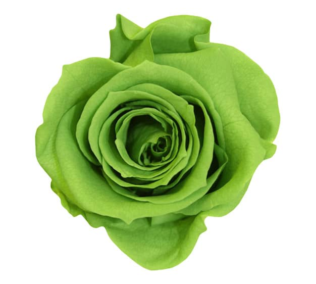 Green Roses Meaning Single Green Rose