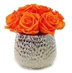 Heinau Nova Rose Orange Flowers Roses