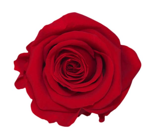 Red Roses Meaning Single Red Rose